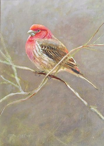 House Finch 12x9 oil on canvas
