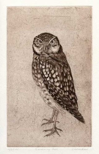 Martin Burrowing Owl 6x10 etching unframed