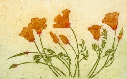 Martin California Poppies  10.5x7 etching with aquatint unframed
