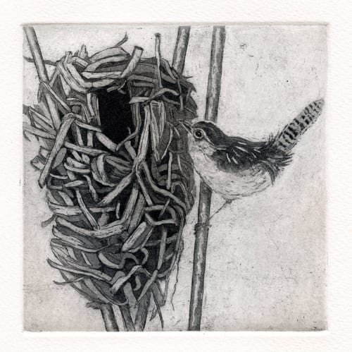 Martin Marsh Wren Nest 5x5 etching unframed