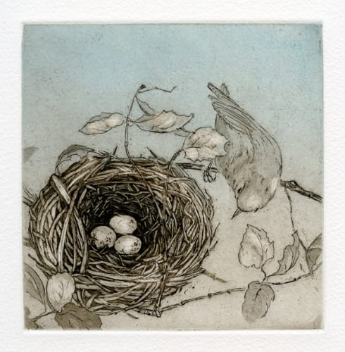 Martin Orange Crowned Warbler 5x5 etching with aquatint unframed