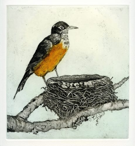 Martin Robin and Nest 7.5x8 etching with aquatint unframed