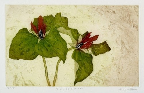 Martin Trillium 5.75x9.25 etching with aquatint unframed